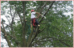Working Tree Maintenance