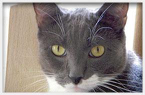 Veterinary Hospital | Massapequa, NY | Massapequa Hospital for Animals | 516-798-8700