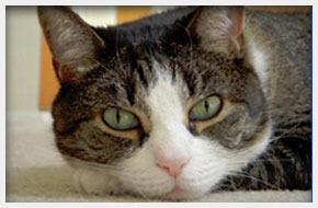 Veterinarian | Massapequa, NY | Massapequa Hospital for Animals | 516-798-8700