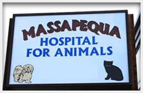 Veterinarian | Massapequa, NY | Massapequa Hospital for Animals | 516-798-8700