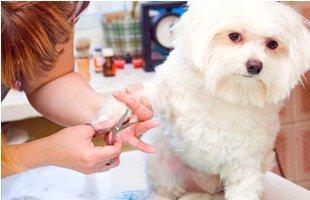 Nail trimming | Poway, CA | Dapper Doggery | 858-748-7554