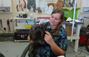 Dog grooming | Poway, CA | Dapper Doggery | 858-748-7554