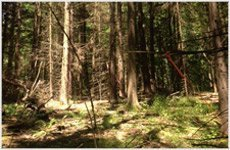 forest land | Saratoga Springs, NY | Saratoga Land Management Corp | 518-899-2744