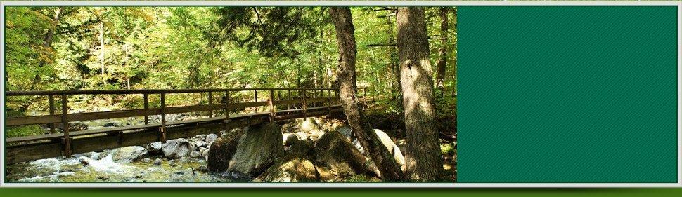 forestry service | Saratoga Springs, NY | Saratoga Land Management Corp | 518-899-2744