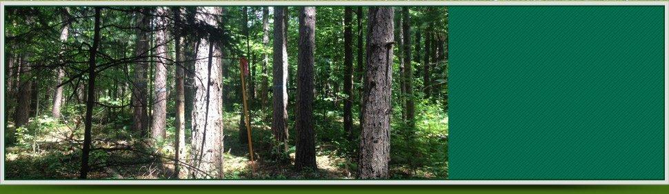 forests | Saratoga Springs, NY | Saratoga Land Management Corp | 518-899-2744