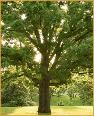 Tree trimming | Knoxville, TN | Legends Lawn Care LLC | 865-247-4556