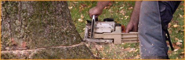 Tree removal | Knoxville, TN | Legends Lawn Care LLC | 865-247-4556
