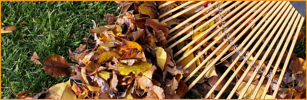 Fall Clean Up | Knoxville, TN | Legends Lawn Care LLC | 865-247-4556
