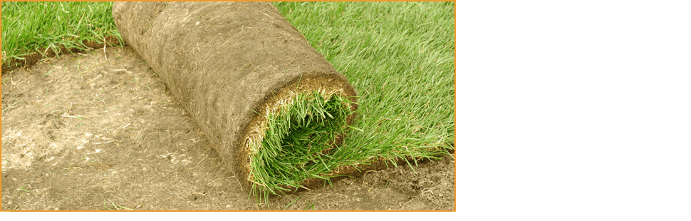 Lawn care | Knoxville, TN | Legends Lawn Care LLC | 865-247-4556