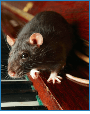 Pest control | Oklahoma City, OK | Best Exterminators | 405-272-0451
