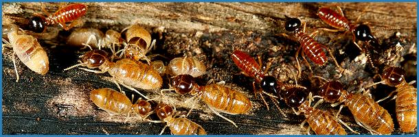 Termite infestation | Oklahoma City, OK | Best Exterminators | 405-272-0451