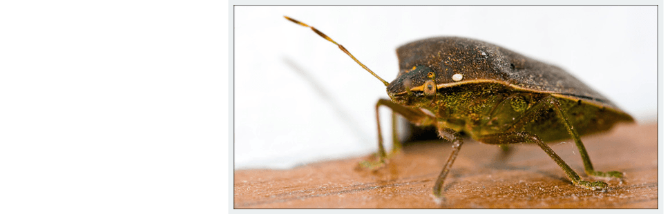 Bed bug treatment | Oklahoma City, OK | Best Exterminators | 405-272-0451