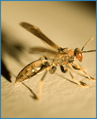 Wasps and yellow jackets | Oklahoma City, OK | Best Exterminators | 405-272-0451