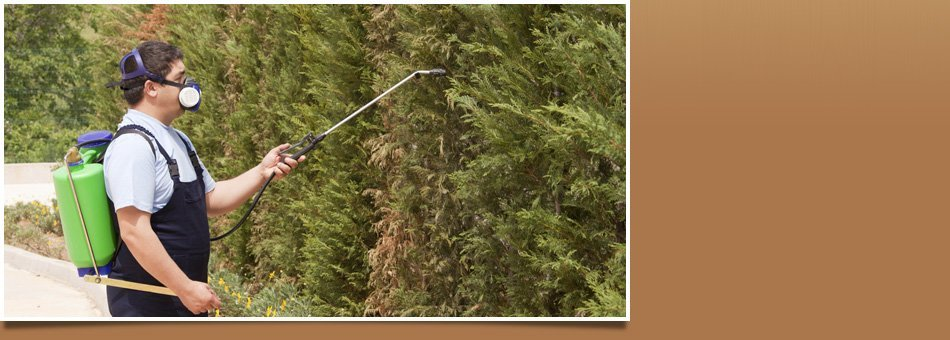 Rodent exterminator   Waukee, IA   JN Termite & Pest Control   515-975-6457