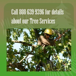 tree service - Kauai, HI - Final Touch Yard Service - tree trimming - Call 808-639-9396  for details about our Tree Services