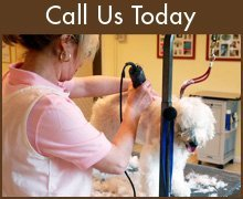 Pet Grooming - Cape Coral, FL - Patriot Pets & Supplies