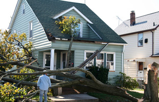 Trees fallen on a houses
