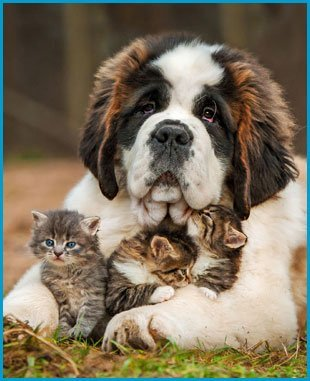 Complete Pet Care | Mobile, AL | Town & Country Animal Hospital | 251-633-7387