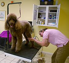 Groomers - Omaha, NE - Pucci's - Dog Grooming