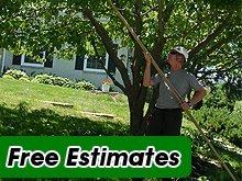 Tree Service - West Fargo, ND - Jason Fischer Hedge Service