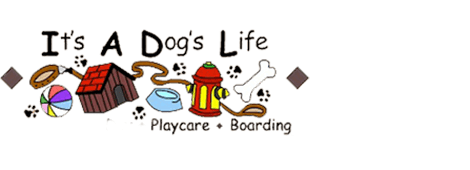 Pet Sitting | Portland, OR | It's A Dog's Life Playcare/Boarding | 503-286-2668