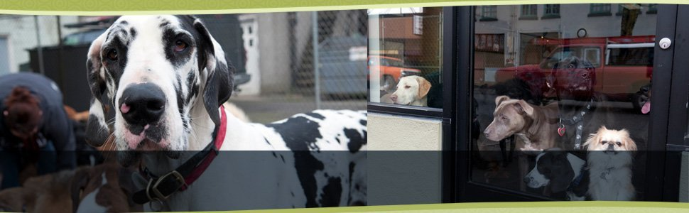 Pet Sitting   Portland, OR   It's A Dog's Life Playcare/Boarding   503-286-2668