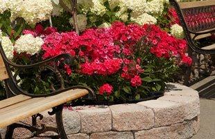 Landscape Design | Palm Harbor, FL | James Peck Landscape Services Inc. | 727-710-5000