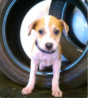 Used car wheels with dog