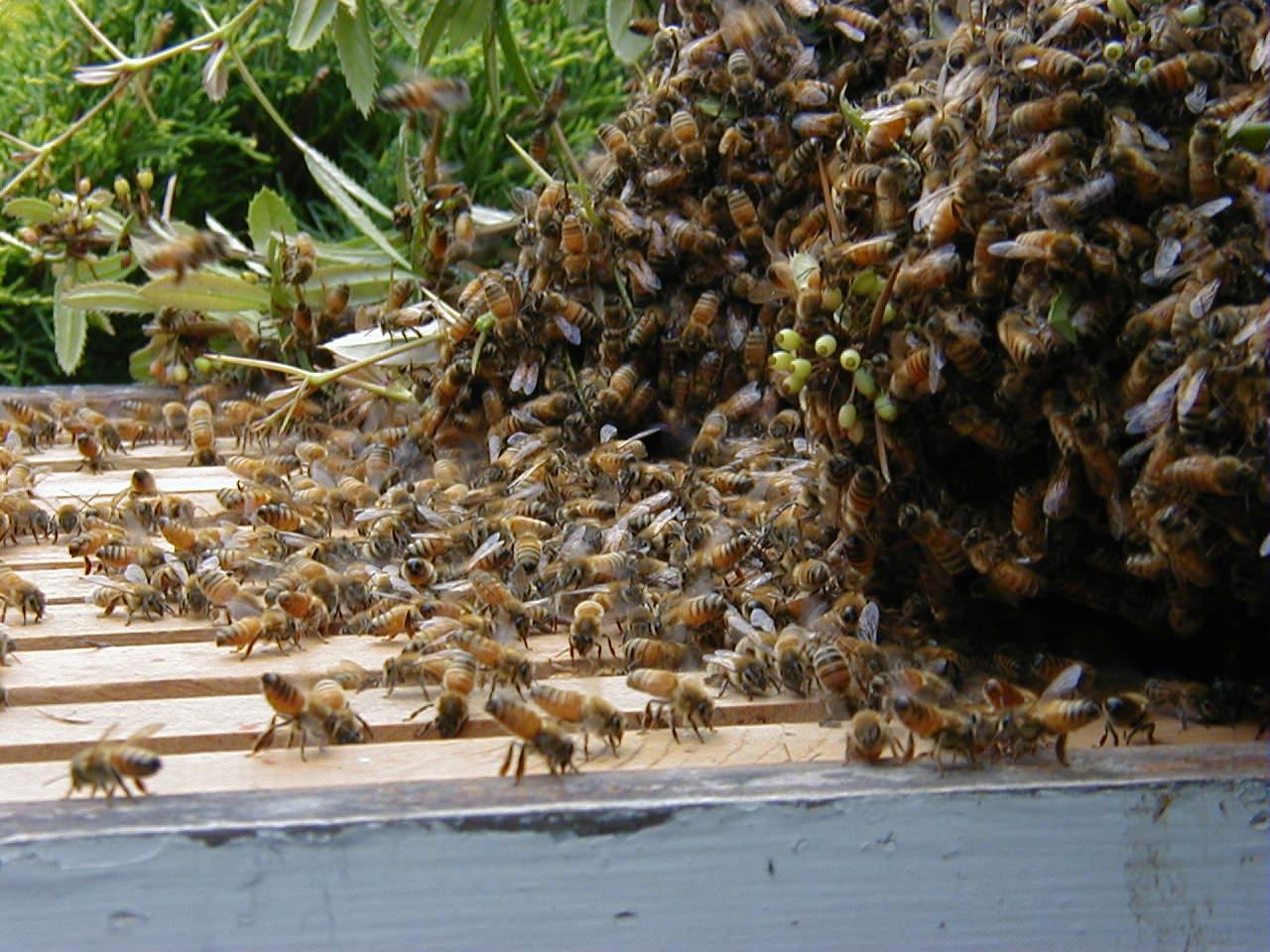 Top of hive box
