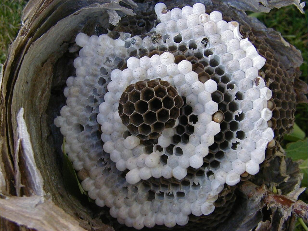 Inside nest