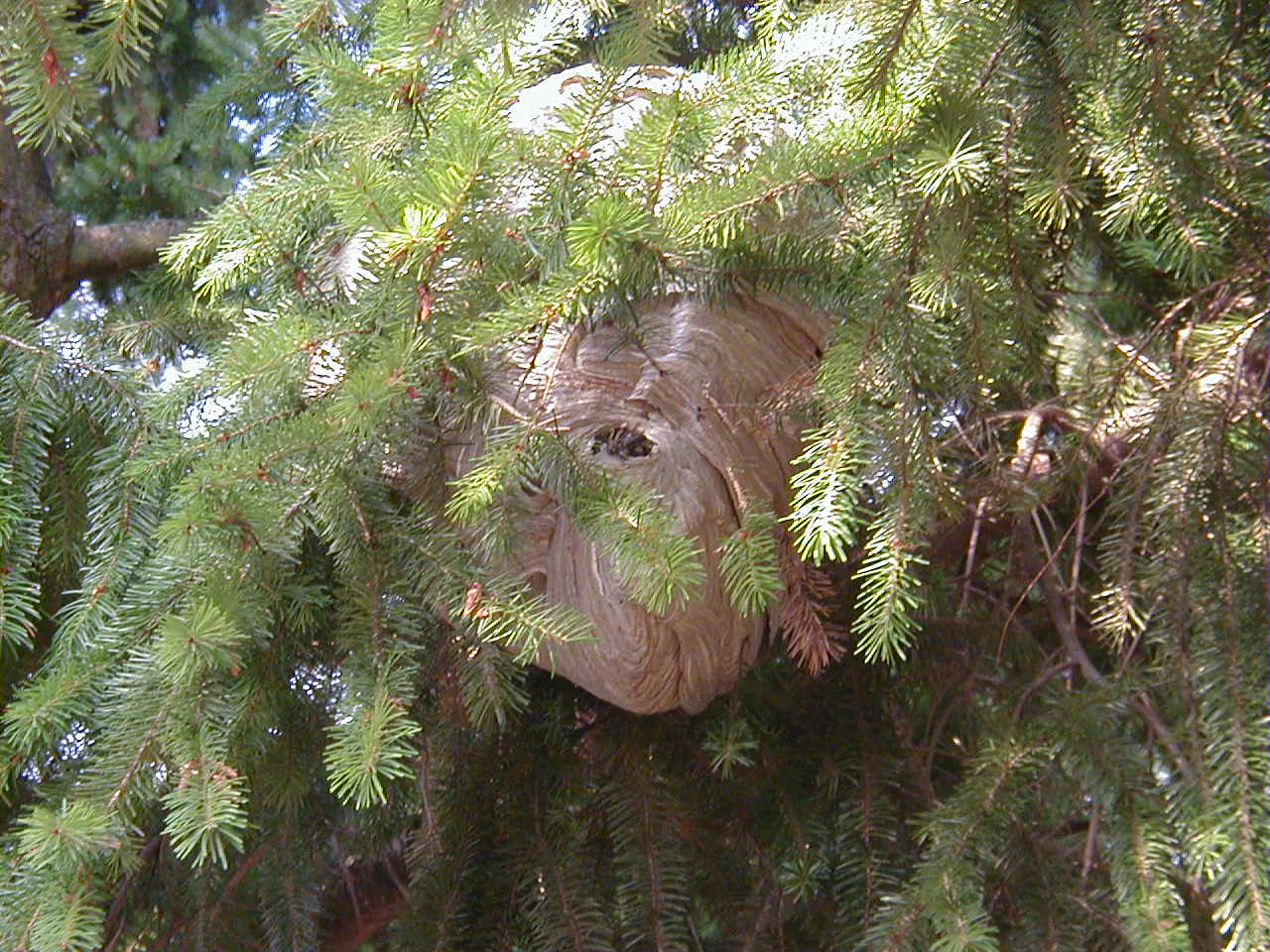 Nest with branches through it