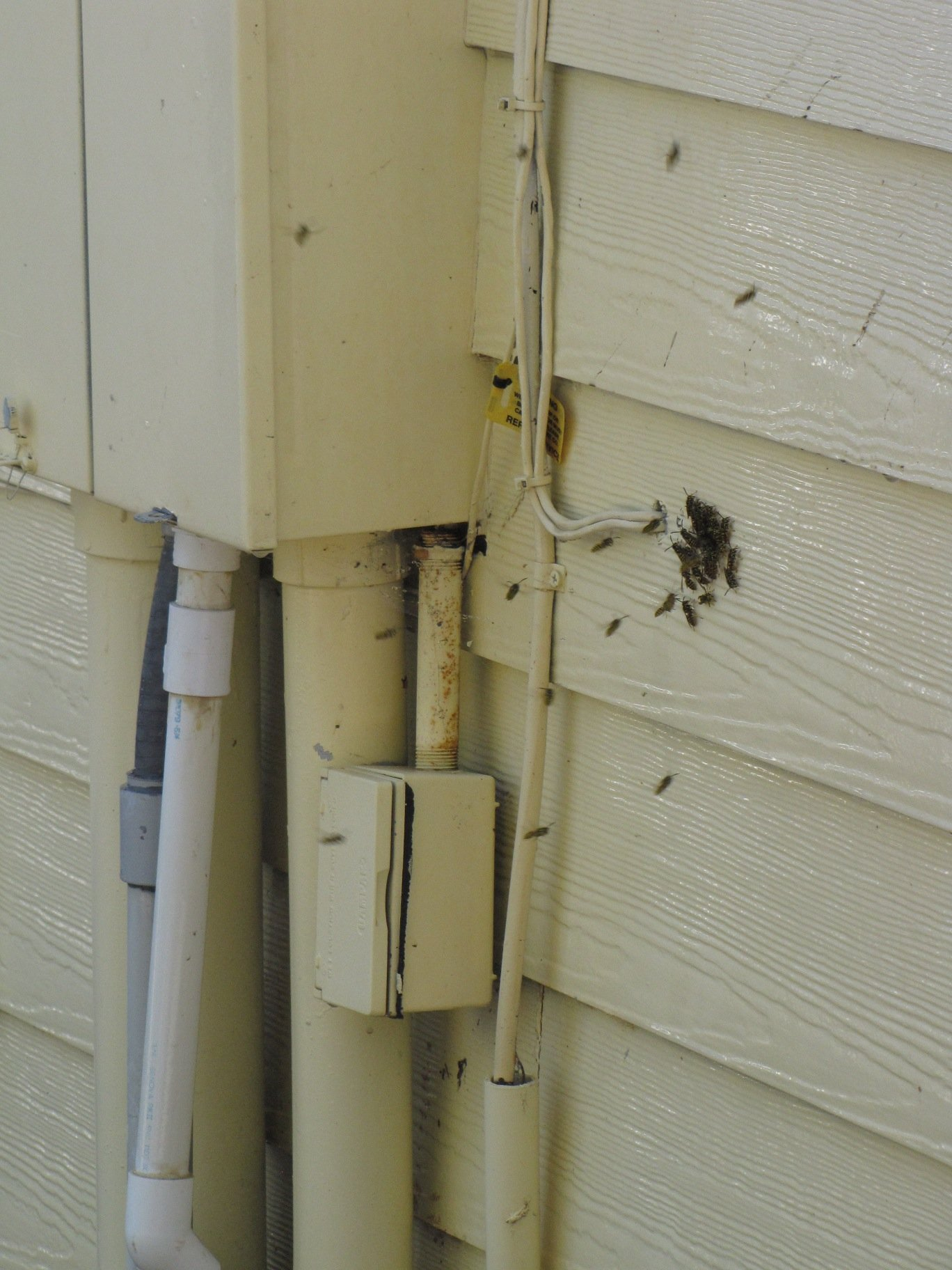Bees in wall at cable hole