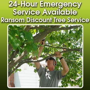 Tree Maintenance Service  - Fort Wayne, IN - Ransom Discount Tree Service