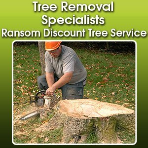 Tree Removal Services  - Fort Wayne, IN - Ransom Discount Tree Service
