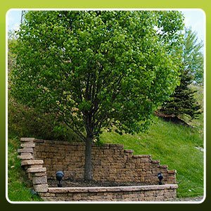 Tree Maintenance - Fort Wayne, IN - Ransom Discount Tree Service