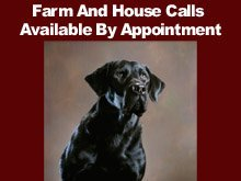 Veterinary Clinic - Brownfield, TX - Terry County Veterinary Hospital