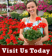Florists - Howard City, MI - Howard City Floral & Gifts - Flower Shop - Visit us today
