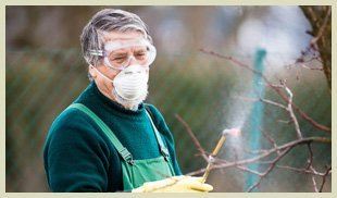 Man spraying on trees