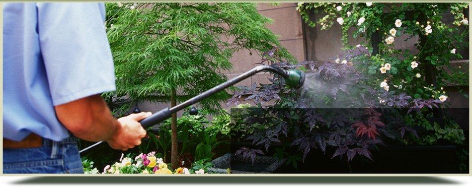 Man spraying on plants