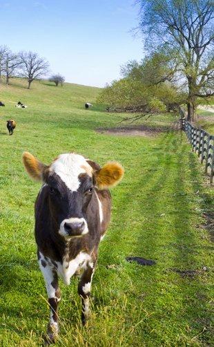 field fences | Wellborn, FL | PGE Fencing | 386-965-4062