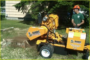 Stump Grind | Waterford, CT | Allied Tree Experts | 860-572-7199