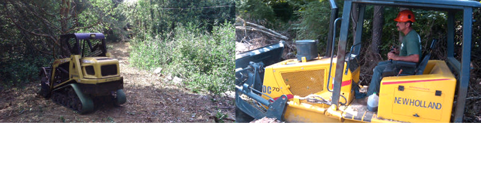 Land clearing | Waterford, CT | Allied Tree Experts | 860-572-7199