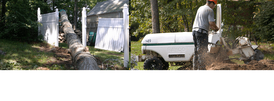 Tree services | Waterford, CT | Allied Tree Experts | 860-572-7199
