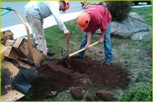 Tree Planting | Waterford, CT | Allied Tree Experts | 860-572-7199