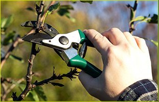 Tree Pruning | Waterford, CT | Allied Tree Experts | 860-572-7199
