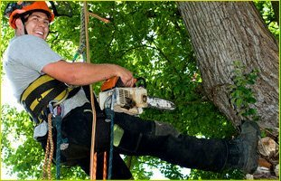 Arborist | Waterford, CT | Allied Tree Experts | 860-572-7199
