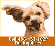 Veterinarian - Great Falls, MT - Great Falls Veterinary Service - Dog - Call 406-453-1629 For Inquiries.