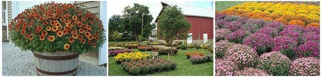 Garden Nurseries - Buckley, IL - Windmill Gardens