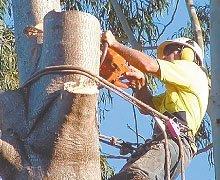 Tree Pruning - Marenisco, MI - Jake's Tree Removal -  tree removal