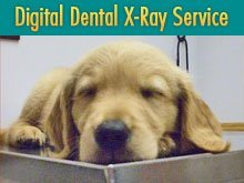 Veterinarian - Lemont Furnace, PA - Geary Veterinary Services